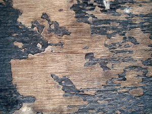 Refinishing old hardwood floors